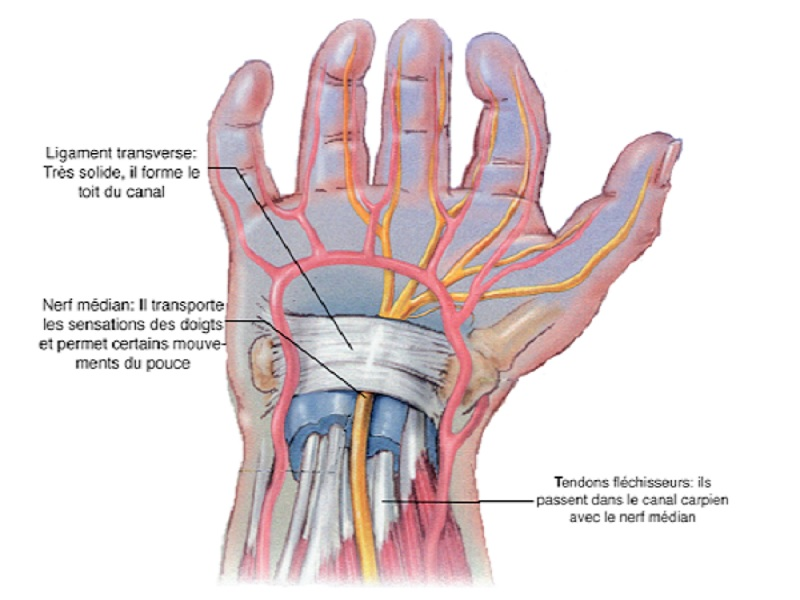 Surgery of the Carpal Tunnel 1